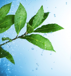 RaindropTechniqueEssentialOils-EssenceoftheSunMassage
