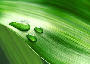 Green leaf - Sign of wellness